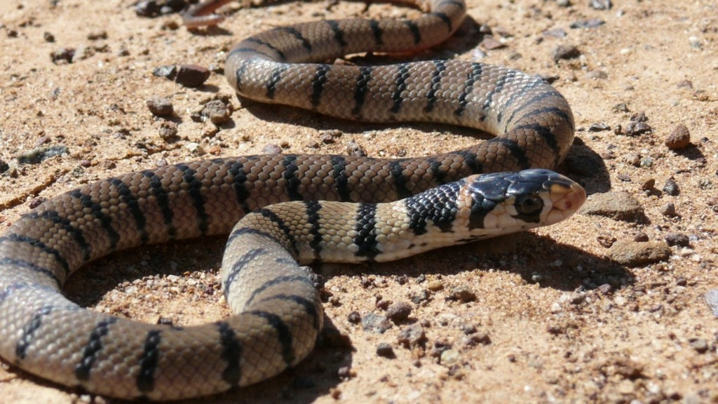 10 Most Venomous Snakes in the World | Sia Magazine