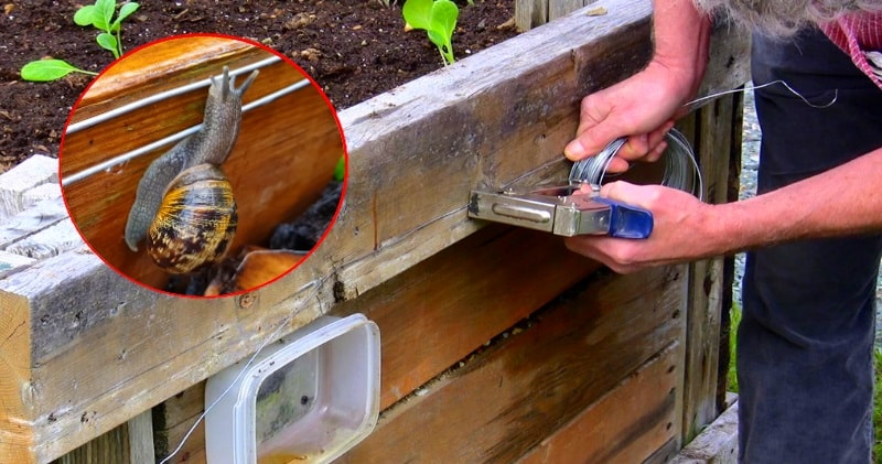 How To Make A 9volt Electric Snail Slug Fence Keep Slugs Out Of Your Garden Beds Sia Magazine