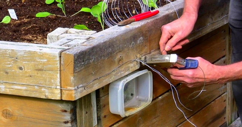 How to make a 9volt electric snail slug fence keep slugs out of your garden beds sia magazine for How to keep slugs out of garden