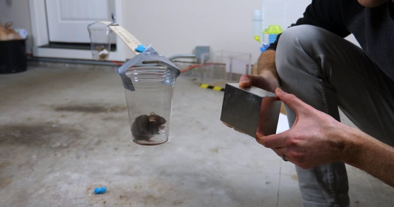 A Giant Monster Neodymium Magnet Is So Strong It Can Move A Mouse
