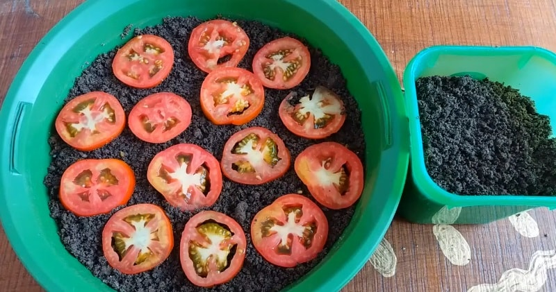 Grow Tomatoes From Fresh Tomato Seeds