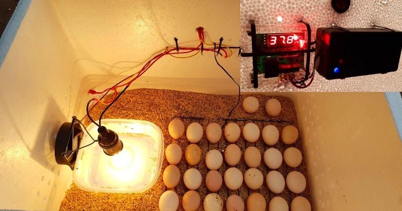 Diy Make An Hatching Egg Incubator At Home